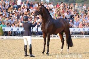 2-300x200 in Rapace v. Blue Hors Romanov/Sandro Hit für 130.000€ auf der 131. Hannoveraner Eliteauktion verkauft